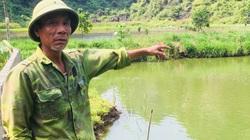 Ninh Bình: Muốn giàu nuôi cá to bự ở nơi xung quanh là núi đá, ông nông dân lãi 300 triệu mỗi năm