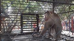 Bạc Liêu: Một khu du lịch nuôi nhốt động vật rừng trái phép-đó là khu du lịch nào?