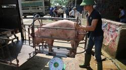 """Giá lợn hơi cứ xỉu dần, nông dân vùng """"thủ phủ nuôi lợn"""" phía Bắc nhiều nhà bỏ chuồng hoang"""