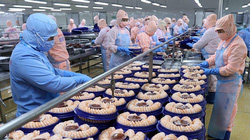 Mỹ nhập khẩu nhiều nhất mặt hàng này vì người dân ngày càng ăn nhiều, thuỷ sản Việt Nam sẽ bán chạy?