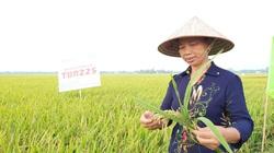 Vụ đông xuân miền Bắc thắng lợi toàn diện: Giảm 12.000ha trồng, tăng 34.000 tấn lúa