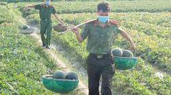 """Công an vùng """"tâm dịch"""" Bắc Giang ra đồng thu hoạch nông sản giúp nông dân"""