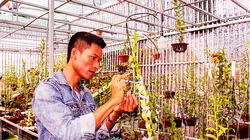 """Hoa lan đột biến: Một """"nông dân tay ngang"""" tỉnh Khánh Hòa bỏ lương 40-50 triệu về ươm kie lan đột biến gì?"""