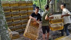 Giá gia cầm hôm nay 7/5: Người nuôi vịt sạch kêu trời, ít ai ngờ mặt hàng này lại xuất khẩu được nhiều
