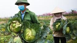 Bộ Nông nghiệp kêu gọi gỡ khó cho tiêu thụ nông sản vì dịch Covid-19