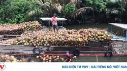 Cả thế giới thiếu loại quả này, giá dừa xiêm xanh tăng cao nhất 1 năm qua