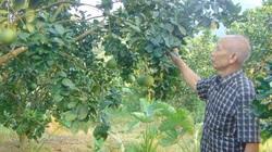 Thái Nguyên: Xây dựng 4 vùng sản xuất nông nghiệp tập trung quy mô 700ha