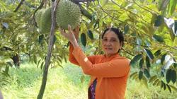 Tiền Giang: Nhiều loại trái cây rớt giá thảm, riêng thứ trái cây này giá vẫn cao, thương lái muốn mua cả vườn