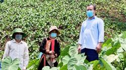 Lai Châu: Hiệu quả từ chuyển đổi cơ cấu cây trồng ở xã Nậm Xe