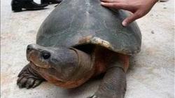 Kỳ tích trời ban: Khai quật ngôi mộ 2000 năm tuổi lại thấy 'cụ' rùa nghìn năm chui ra