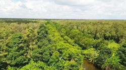 Hậu Giang: 370 tỷ đồng đầu tư vào khu bảo tồn có nhiều động vật quý hiếm, trong đó có loài rắn hổ mang chúa