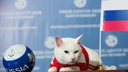 """Mèo lông trắng Achilles được thành phố St. Petersburg chọn làm """"nhà tiên tri"""" EURO 2020"""