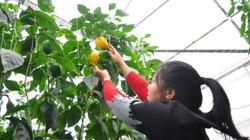 Lâm Đồng tăng thu hút đầu tư vào nông nghiệp công nghệ cao