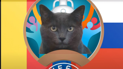 """Mèo """"tiên tri Cass"""" dự đoán tỷ số trận Bỉ vs Nga"""
