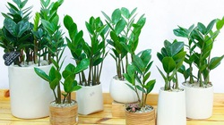 Bật mí loài cây phong thủy sẽ mang lại may mắn, thịnh vượng cho 12 con giáp