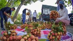 Video: Tìm giải pháp thúc đẩy mô hình kết nối cung cầu nông sản chính quy