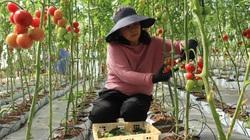 """Lâm Đồng: Giá thuê đất nông nghiệp """"trên trời"""" khiến nhà đầu tư """"e ngại"""""""