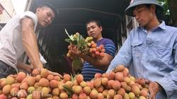 TT-Huế: Vận động công chức, người lao động hỗ trợ tiêu thụ vải thiều Bắc Giang