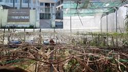 Quảng Ngãi: Mô hình, dự án đầu tư của Sở KH&CN chết yểu làm nóng buổi họp báo