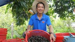 Chán làm thuê ở tỉnh Tiền Giang, trai làng tỉnh Đồng Tháp về đào ao nuôi thứ ốc đặc sản, bắt bán hàng tấn