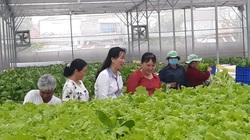 Bình Dương: Ông nông dân bỏ ra 5 tỷ trồng rau thủy canh công nghệ cao bán cho 32 bếp ăn là ai?