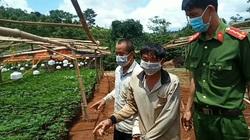 Đắk Nông: Phát hiện 2 vụ trồng cần sa trái phép quy mô như trang trại