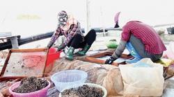 Một xã của tỉnh Thái Bình làm ra 24 tỷ trong 6 tháng đầu năm là nhờ ngành nghề gì?