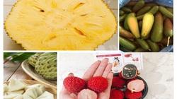 """Dù giá có cao đến đâu thì 7 loại trái cây không hạt này  vẫn """"làm mưa làm gió"""" trên thị trường"""