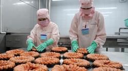 Cà Mau: Khách Âu, Mỹ mua nhiều, loài thủy sản này mang về 1 tỷ USD