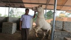 Không phải vàng, USD hay đất, cô dâu số hưởng ở Hữu Kiên được nhận của hồi môn là ngựa bạch quý hiếm