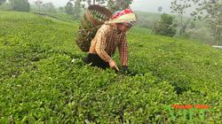 Sôi nổi phong trào nông dân thi đua sản xuất, kinh doanh giỏi ở Tân Uyên