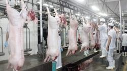 Giá heo hơi giảm, tại sao thịt heo chợ truyền thống vẫn ế ẩm?