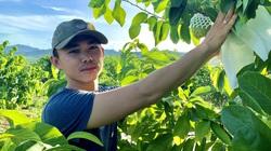 Quảng Bình: Trồng 600 cây na lạ, mới hái trái bói đã thu 1 tấn, lãi hơn 100 triệu đồng