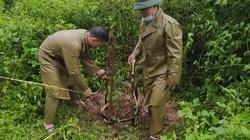 Nậm Pồ: Trồng 2.900 cây hoa ban hưởng ứng Tết trồng cây năm 2021
