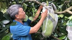 Bơ, chanh, khóm, mít Thái đồng loạt giảm giá, xuất khẩu  rau quả vẫn kỳ vọng đạt 3,6 tỷ USD