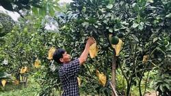 """Nông dân Hóa Hợp rủ nhau trồng loại cây này trên đất đồi, chẳng mấy mà nhiều triệu phú """"ra đời"""""""