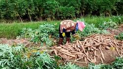 TP.HCM: Hội Nông dân lập kênh tiêu thụ nông sản hỗ trợ nông dân giữa dịch Covid-19