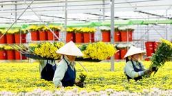 Lâm Đồng kiến nghị cho Dalat Hasfarm sử dụng lượng hạn chế Glyphosate cho hoa, châu Âu xác nhận Glyphosate không gây ung thư