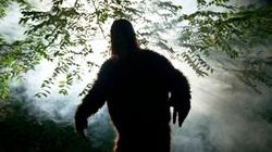 Người đàn ông tuyên bố đã nhìn thấy quái vật thần thoại Bigfoot trong vườn nhà