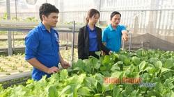 Bình Phước: Lạng ván gỗ cao su, trồng rau thủy canh, 2 chàng thanh niên nhanh làm giàu