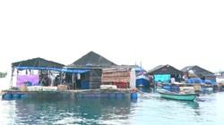 Kiên Giang: Tổ hợp tác nuôi cá lồng bè ở Thổ Châu, từng bước nâng cao thu nhập, cải thiện đời sống