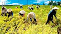 Cổ phiếu lúa gạo tạo sóng trên thị trường chứng khoán