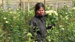 Lâm Đồng mong muốn TP.HCM mở cửa chợ Đầm Sen để giúp tiêu thụ hoa Đà Lạt
