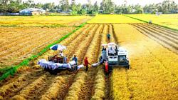 Xuất khẩu gạo 5 tháng: Giảm lượng, tăng giá