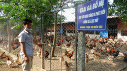 """Hòa Bình: Đệm lót sinh học là """"bí kíp"""" giúp nông dân chăn nuôi gà an toàn, thu tiền tỷ mỗi năm"""