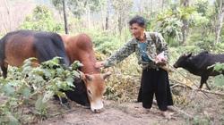 """Sơn La: Lão nông miền biên viễn giáp Lào """"giấu"""" tiền tỷ ở trong rừng"""