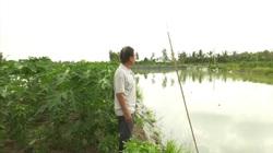 """Vĩnh Long: Mô hình """"trên cây dưới cá"""", lão nông thu về cả tỷ đồng mỗi năm"""