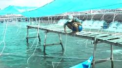 Kiên Giang: Nông dân An Biên nuôi tôm công nghệ cao thích ứng với biến đổi khí hậu