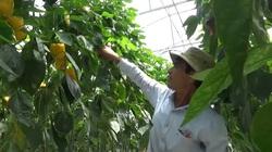 Lâm Đồng: Mô hình sản xuất nông sản sạch trên nền tảng công nghệ cao