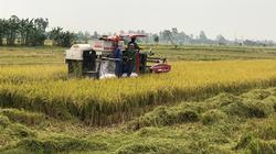 Cơ giới hóa khâu cấy lúa giúp giảm sâu bệnh, nâng cao năng suất, tăng thu nhập